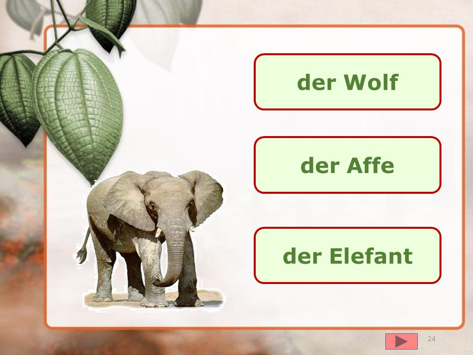 der Wolf der Affe der Elefant