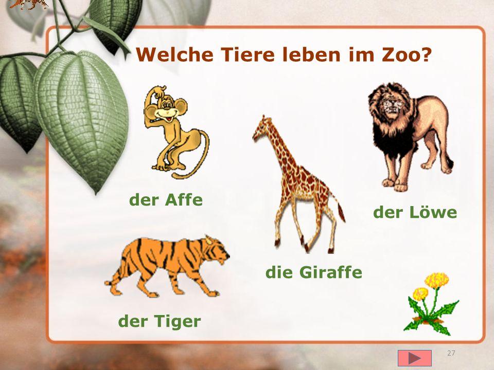 Welche Tiere leben im Zoo