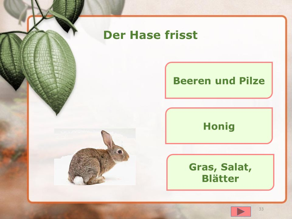 Der Hase frisst Beeren und Pilze Honig Gras, Salat, Blätter далее