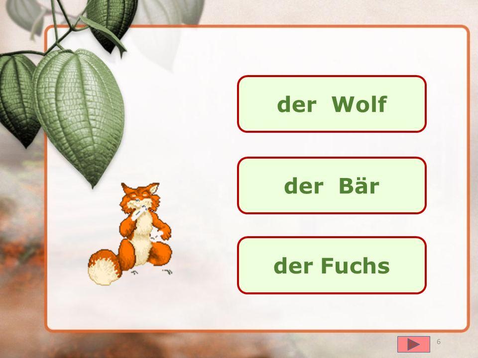 der Wolf der Bär der Fuchs