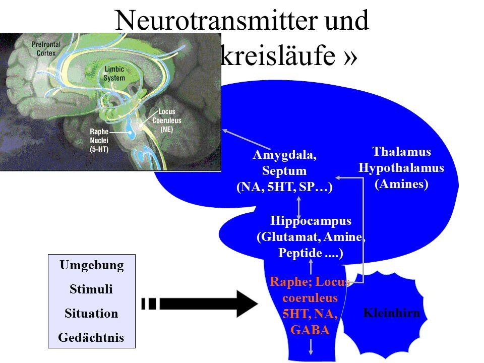 Neurotransmitter und « Angstkreisläufe »