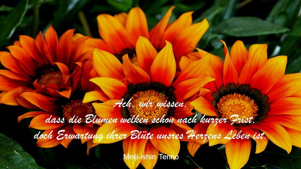 Ach, wir wissen, dass die Blumen welken schon nach kurzer Frist, doch Erwartung ihrer Blüte unsres Herzens Leben ist.