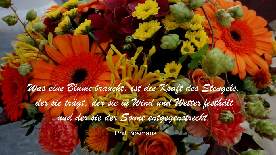 Was eine Blume braucht, ist die Kraft des Stengels, der sie trägt, der sie in Wind und Wetter festhält und der sie der Sonne entgegenstreckt.
