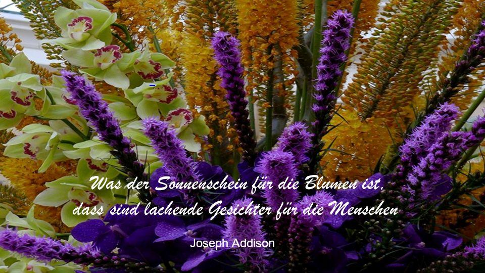 Was der Sonnenschein für die Blumen ist, dass sind lachende Gesichter für die Menschen Joseph Addison
