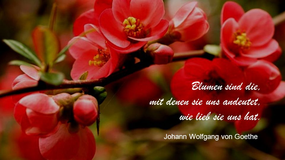 Blumen sind die, mit denen sie uns andeutet, wie lieb sie uns hat