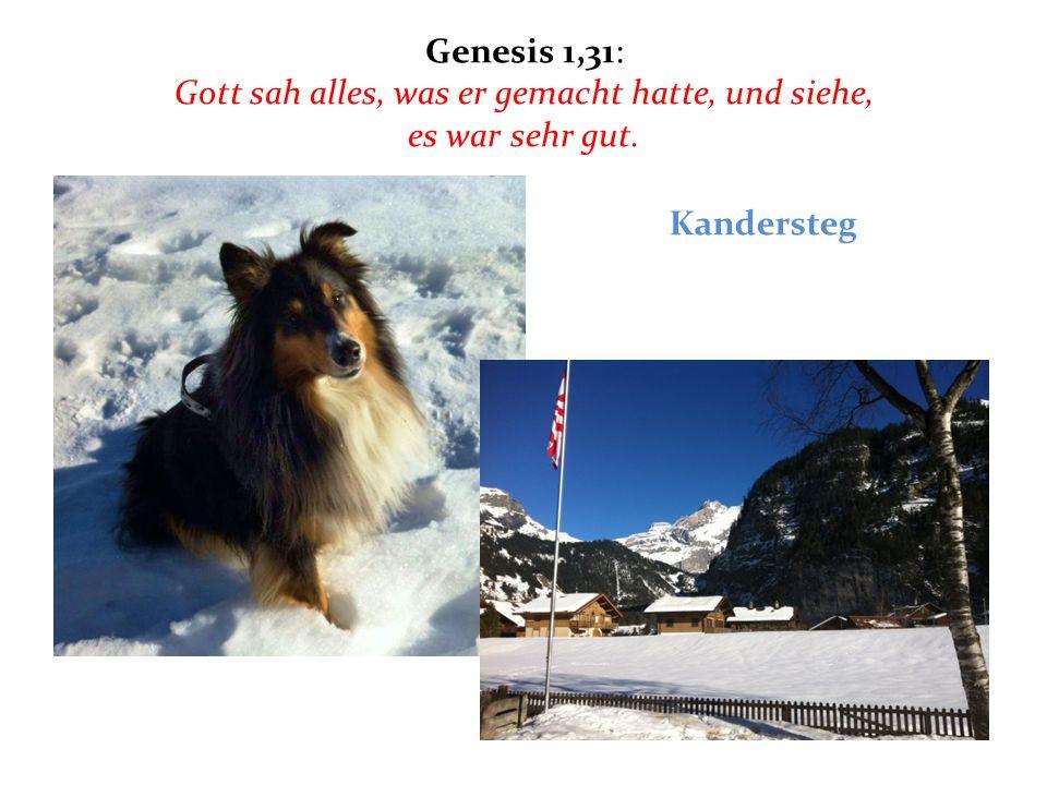 Genesis 1,31: Gott sah alles, was er gemacht hatte, und siehe, es war sehr gut.