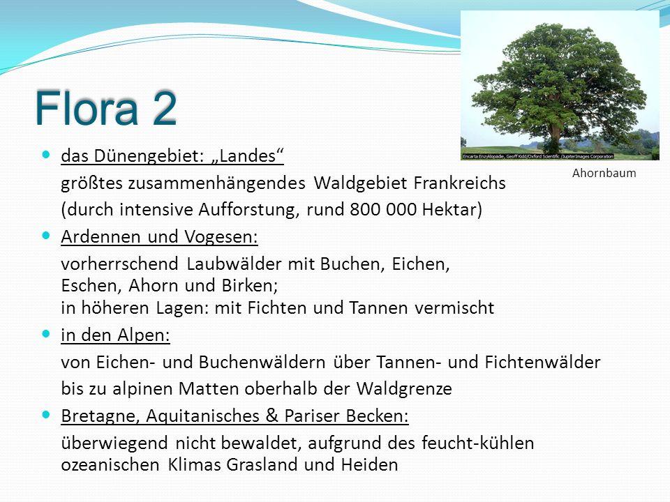 """Flora 2 das Dünengebiet: """"Landes"""