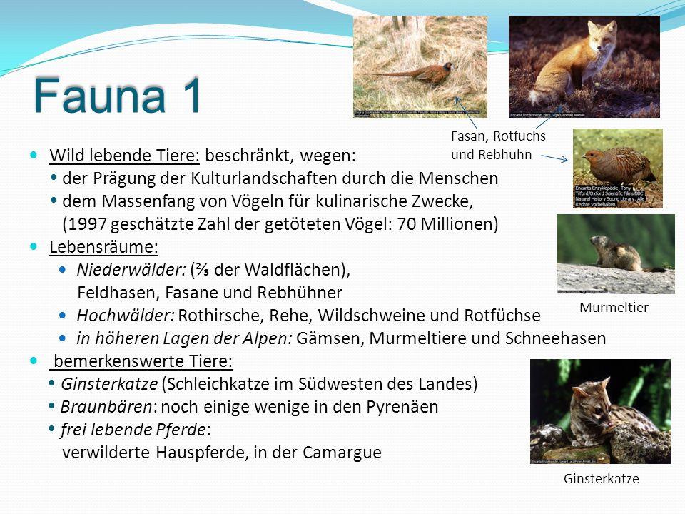 Fauna 1 Wild lebende Tiere: beschränkt, wegen: