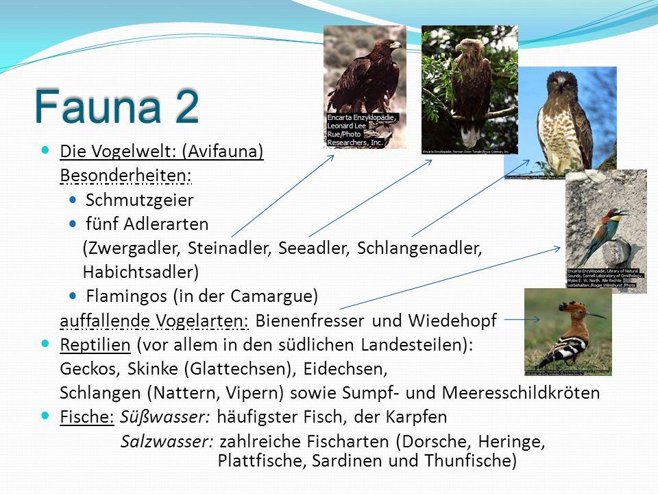 Fauna 2 Die Vogelwelt: (Avifauna) Besonderheiten: Schmutzgeier