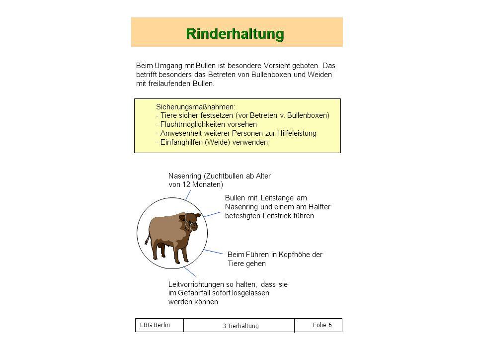 Rinderhaltung Rinderhaltung