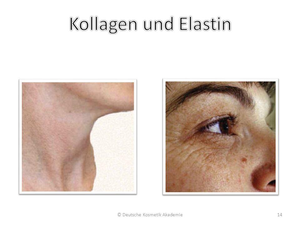Strukturelle Integrität & geringe Hautdichte bei Kollagenverlust