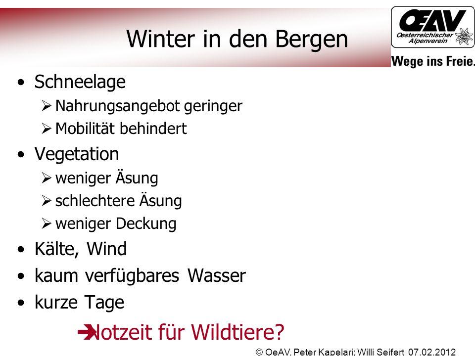 © OeAV, Peter Kapelari; Willi Seifert 07.02.2012