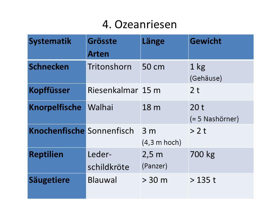 4. Ozeanriesen Systematik Grösste Arten Länge Gewicht Schnecken