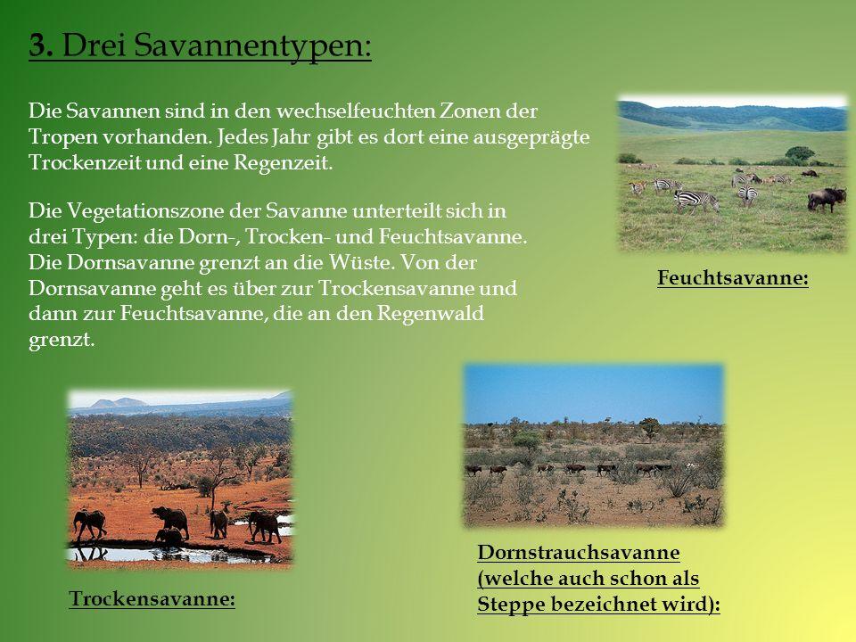 3. Drei Savannentypen: