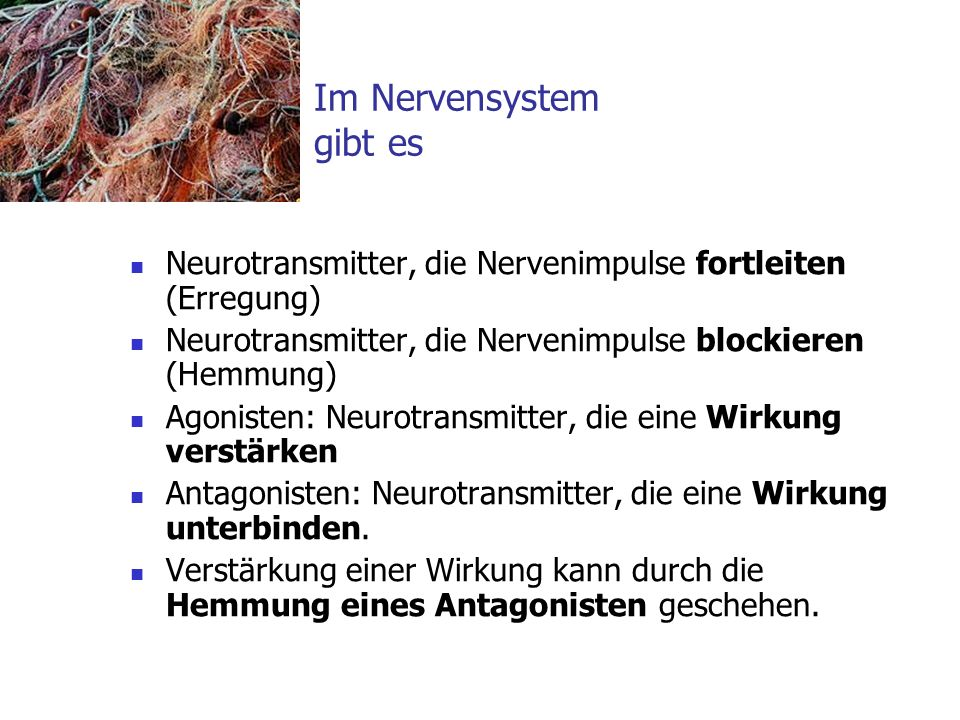 Im Nervensystem gibt es