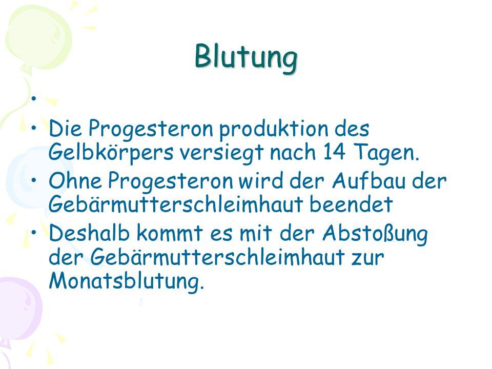 Blutung Die Progesteron produktion des Gelbkörpers versiegt nach 14 Tagen. Ohne Progesteron wird der Aufbau der Gebärmutterschleimhaut beendet.