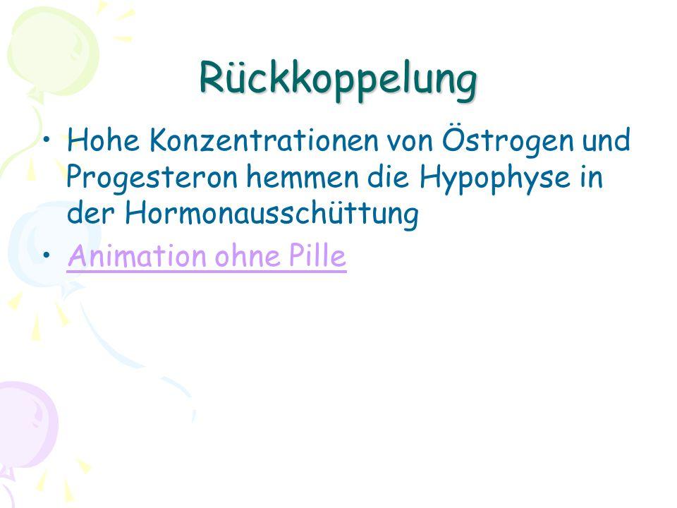 Rückkoppelung Hohe Konzentrationen von Östrogen und Progesteron hemmen die Hypophyse in der Hormonausschüttung.
