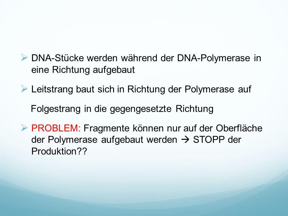 DNA-Stücke werden während der DNA-Polymerase in eine Richtung aufgebaut