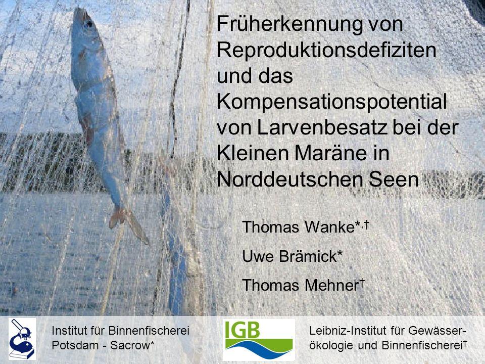 Früherkennung von Reproduktionsdefiziten und das Kompensationspotential von Larvenbesatz bei der Kleinen Maräne in Norddeutschen Seen