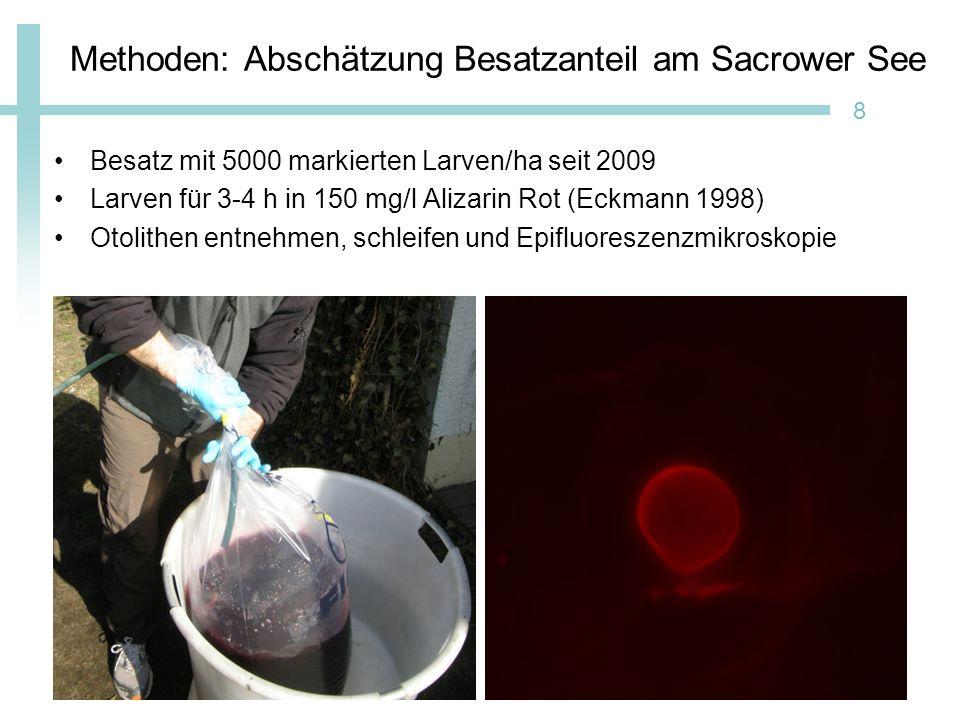 Methoden: Abschätzung Besatzanteil am Sacrower See