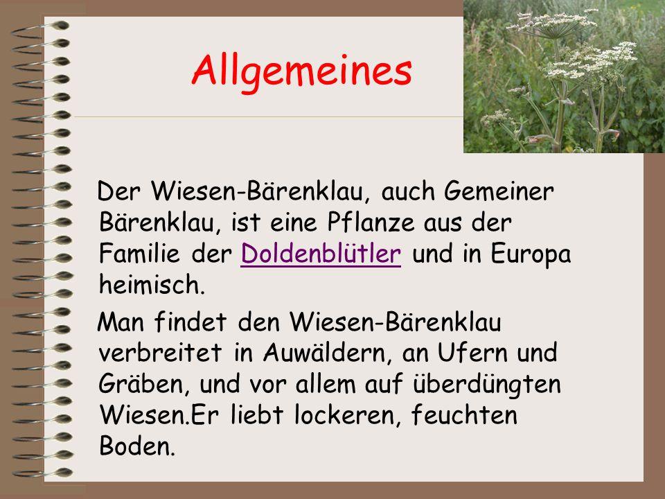 Allgemeines Der Wiesen-Bärenklau, auch Gemeiner Bärenklau, ist eine Pflanze aus der Familie der Doldenblütler und in Europa heimisch.