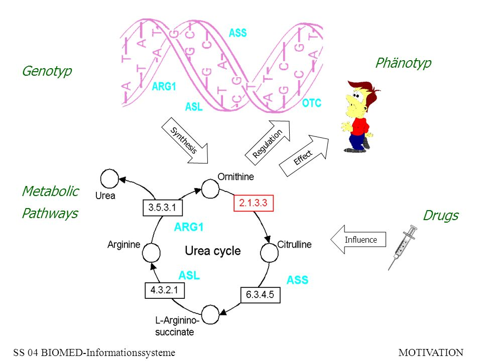 Phänotyp Genotyp Metabolic Pathways Drugs