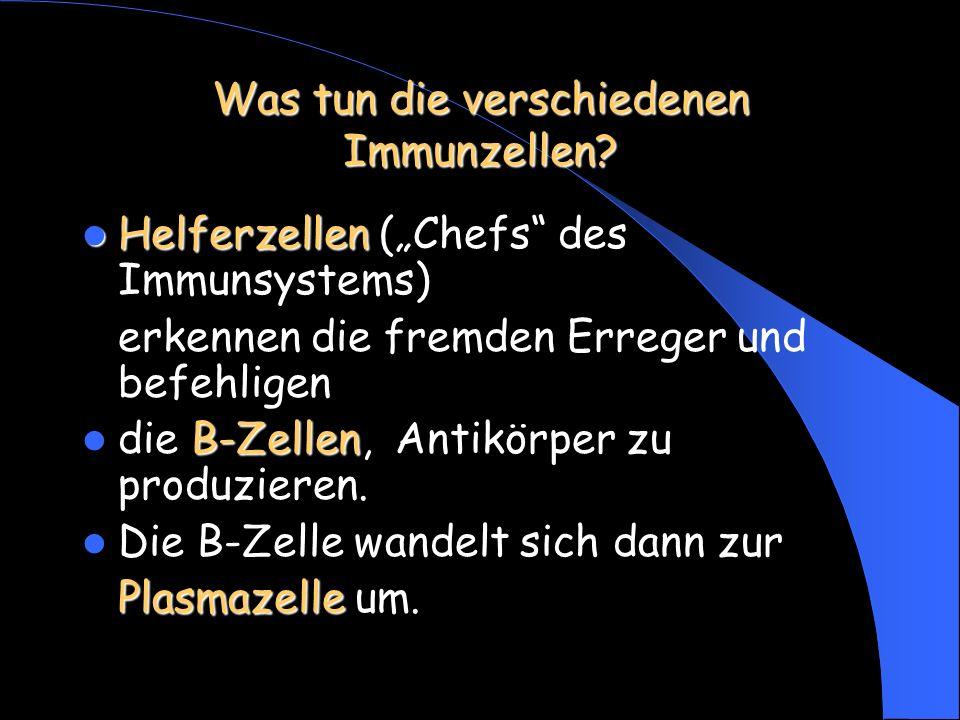 Was tun die verschiedenen Immunzellen