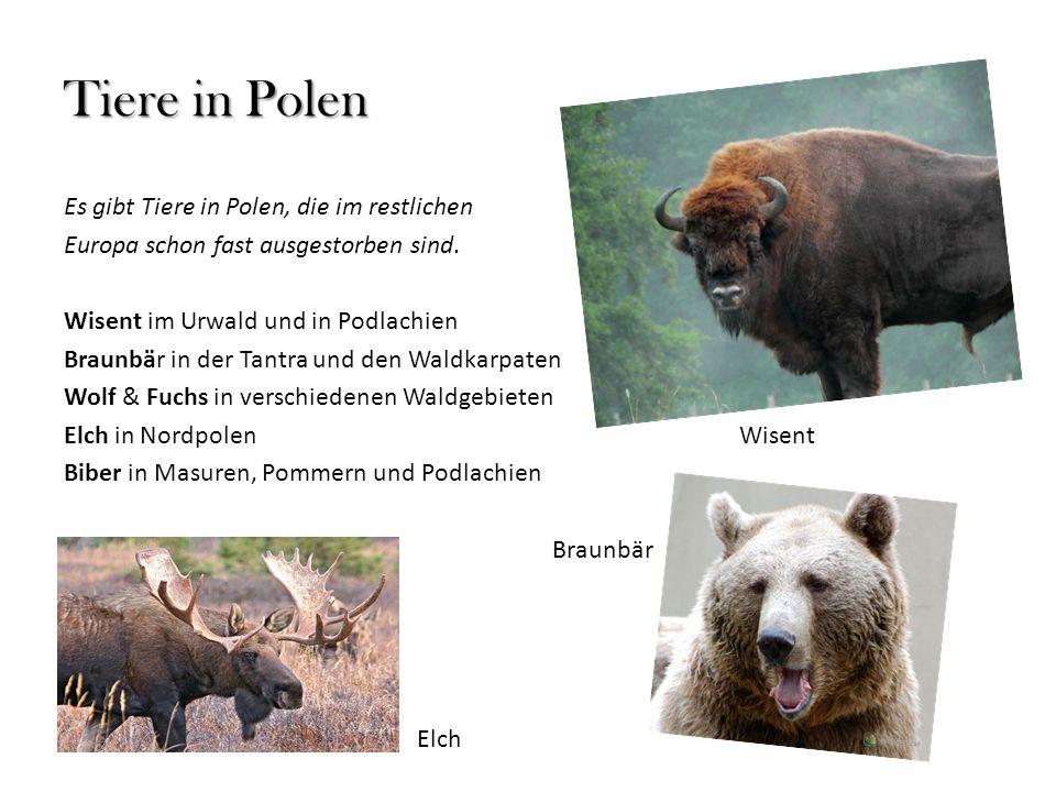 Tiere in Polen