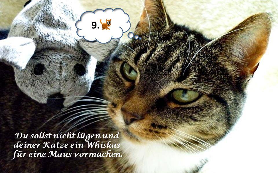 9. Du sollst nicht lügen und deiner Katze ein Whiskas