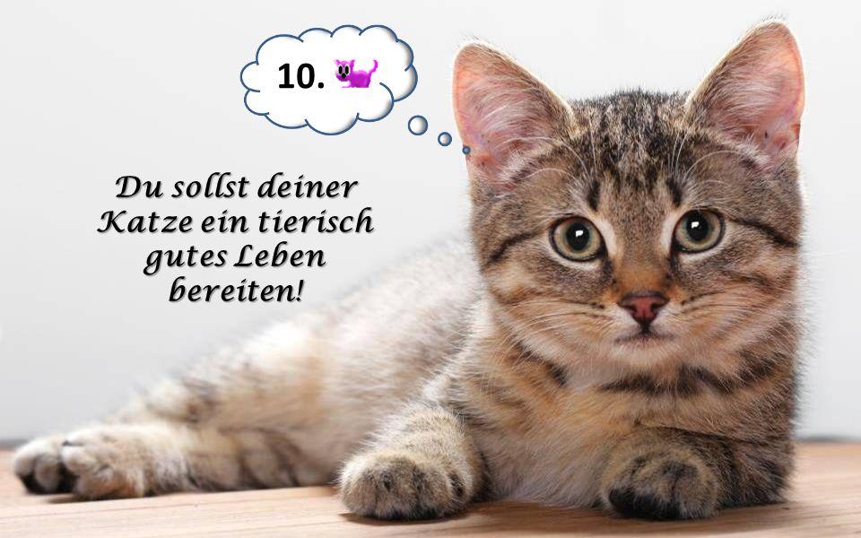 Du sollst deiner Katze ein tierisch gutes Leben bereiten!