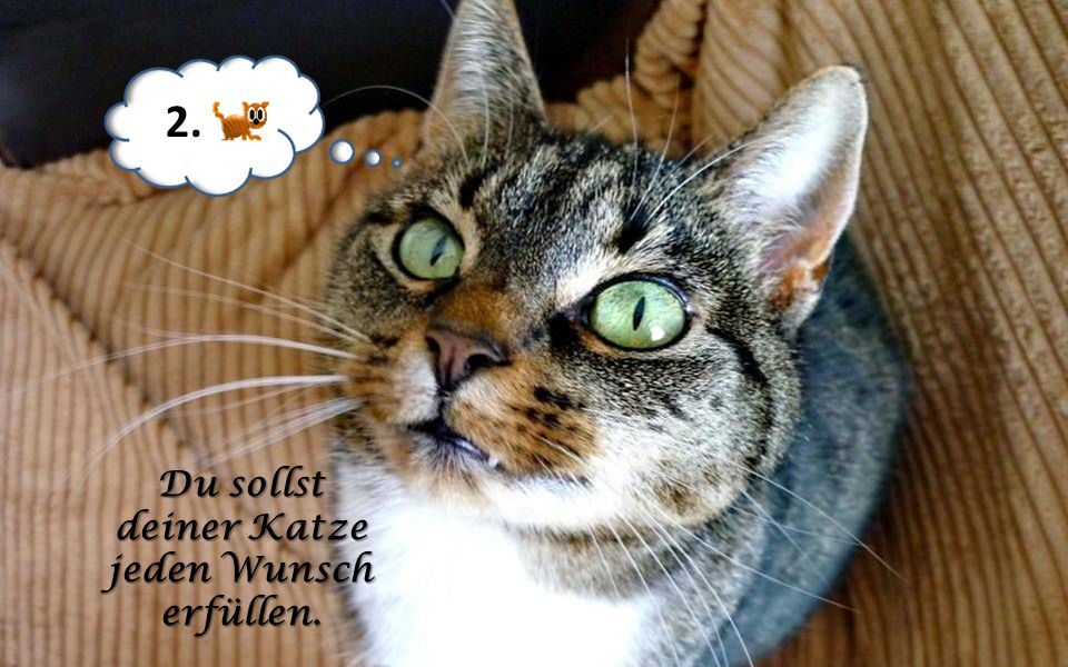 2. Du sollst deiner Katze jeden Wunsch erfüllen.