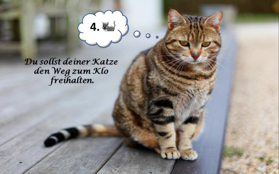 4. Du sollst deiner Katze den Weg zum Klo freihalten.