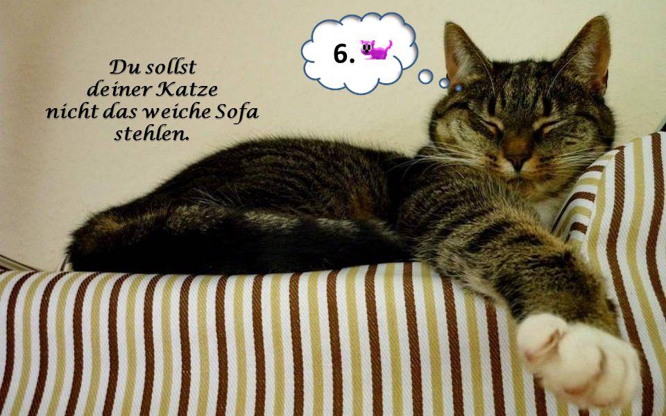6. Du sollst deiner Katze nicht das weiche Sofa stehlen.