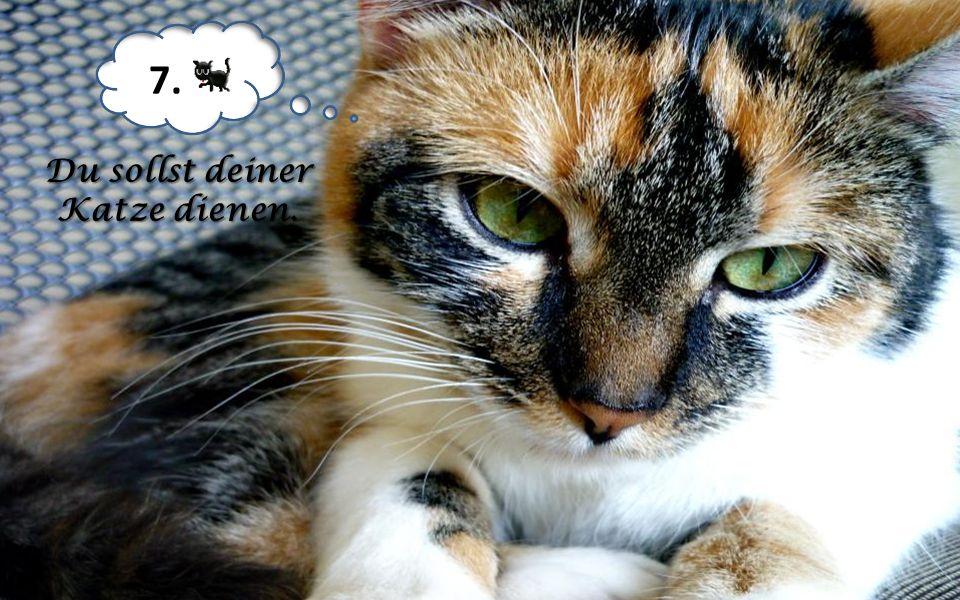 Du sollst deiner Katze dienen.
