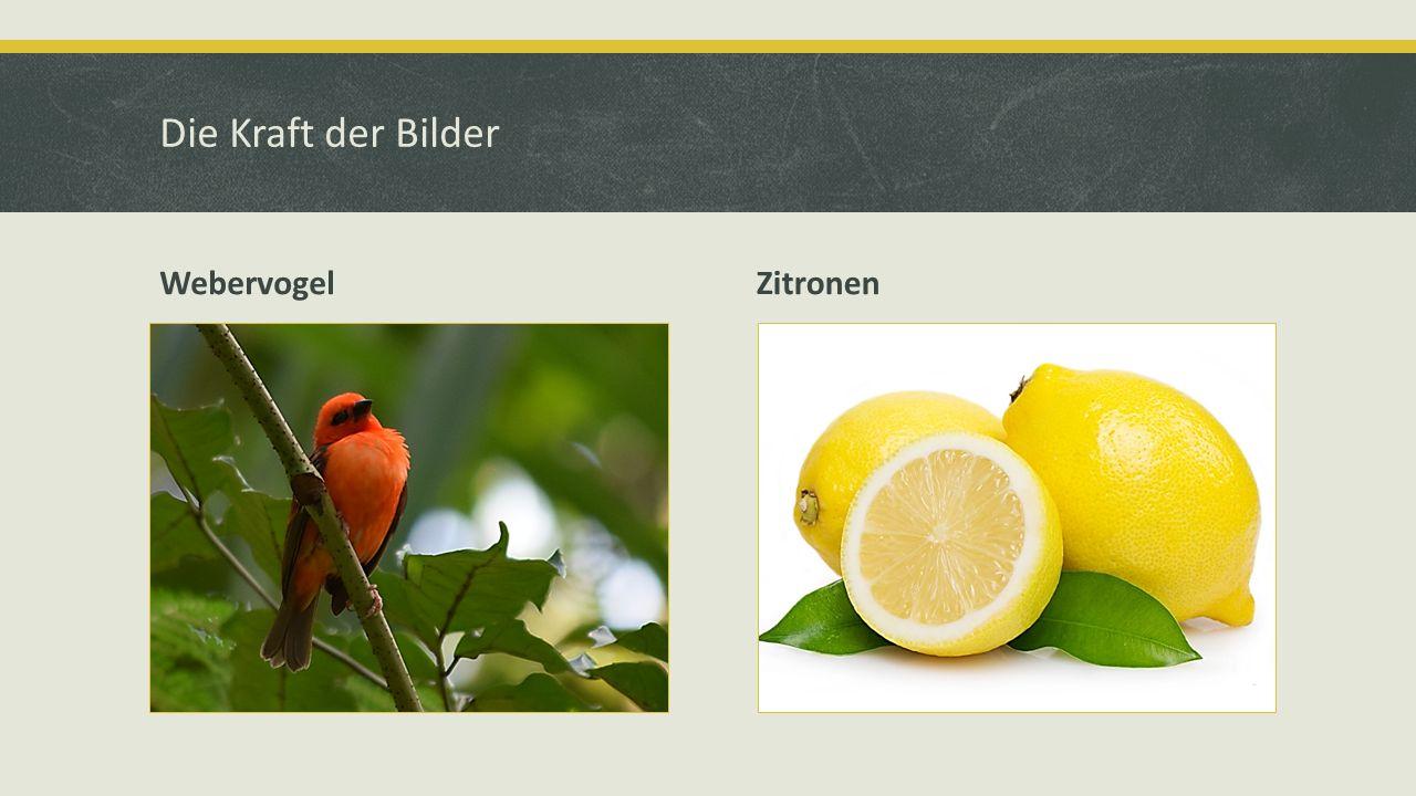 Die Kraft der Bilder Webervogel Zitronen