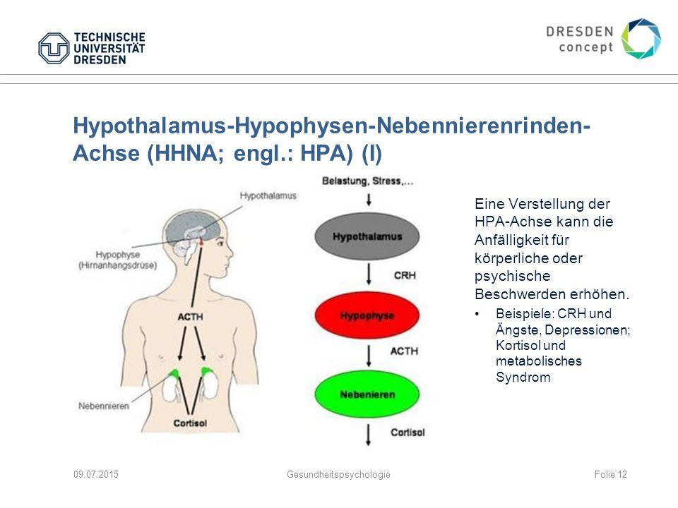 Hypothalamus-Hypophysen-Nebennierenrinden-Achse (HHNA; engl.: HPA) (I)