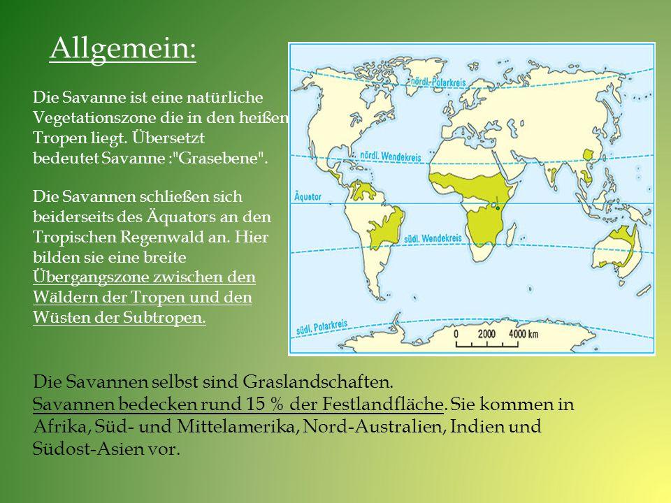 Allgemein: Die Savanne ist eine natürliche. Vegetationszone die in den heißen Tropen liegt. Übersetzt.