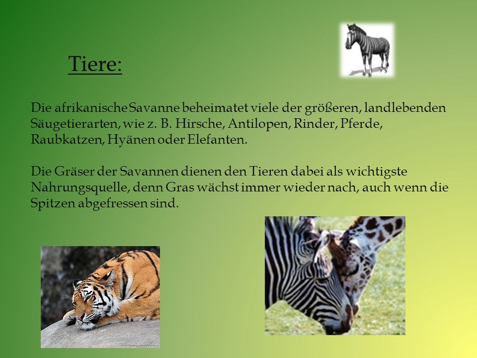 Tiere: