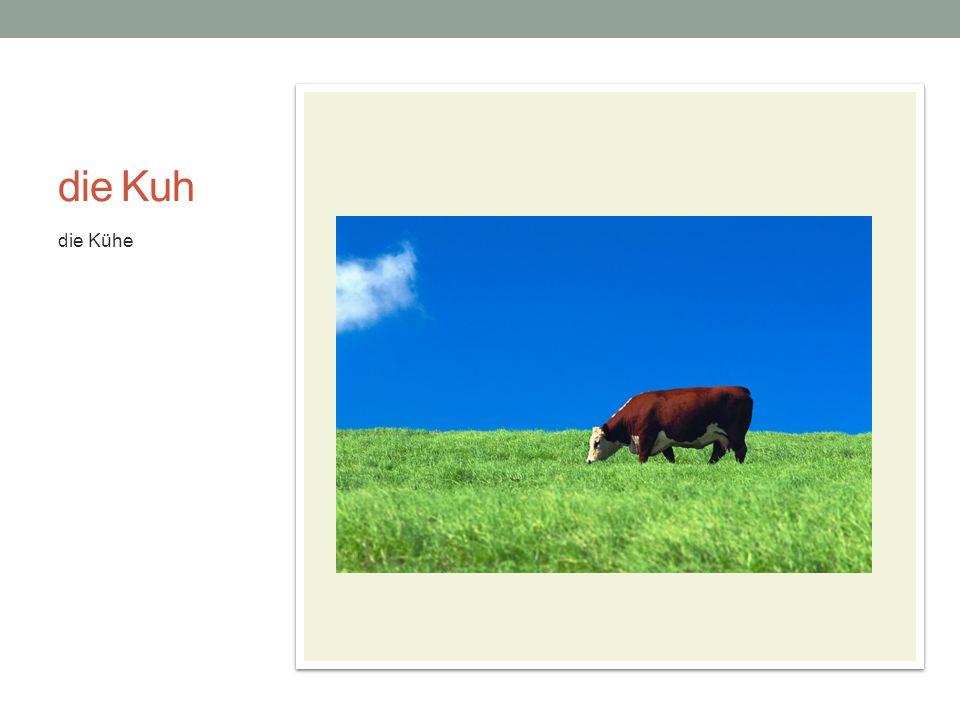 die Kuh die Kühe die Kuh macht muh