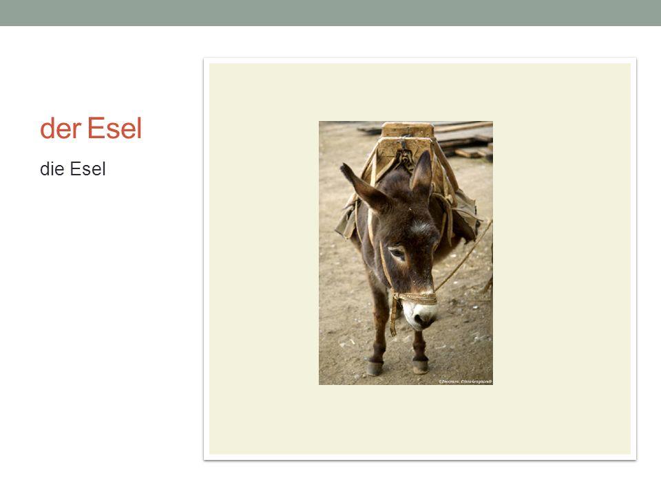 der Esel die Esel die Bremer Stadtmusikanten