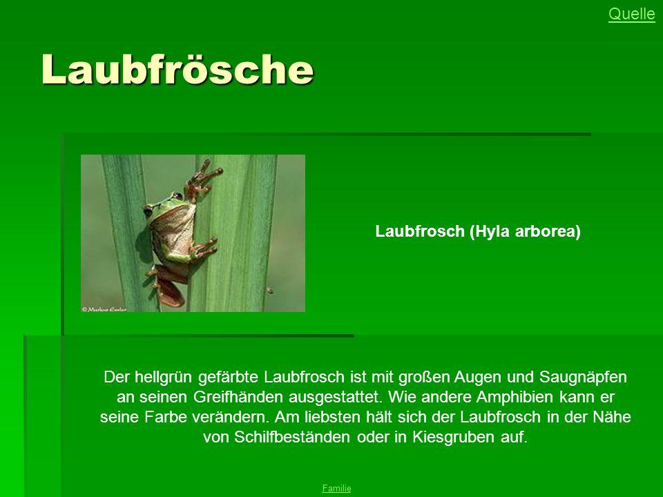 Laubfrösche Quelle Laubfrosch (Hyla arborea)