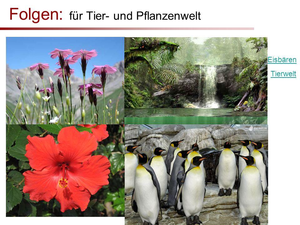 Folgen: für Tier- und Pflanzenwelt