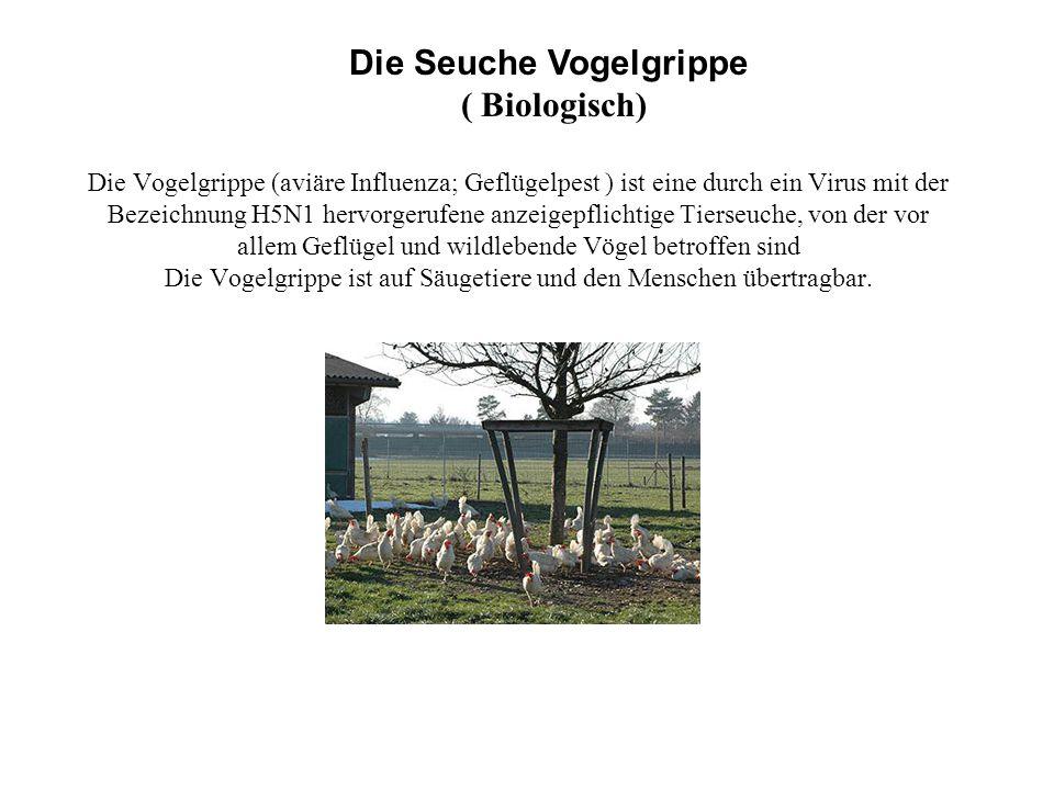 Die Seuche Vogelgrippe ( Biologisch)
