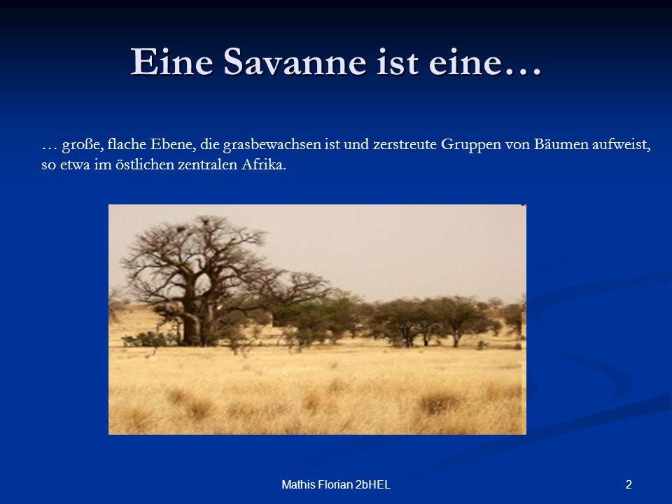 Eine Savanne ist eine… … große, flache Ebene, die grasbewachsen ist und zerstreute Gruppen von Bäumen aufweist,