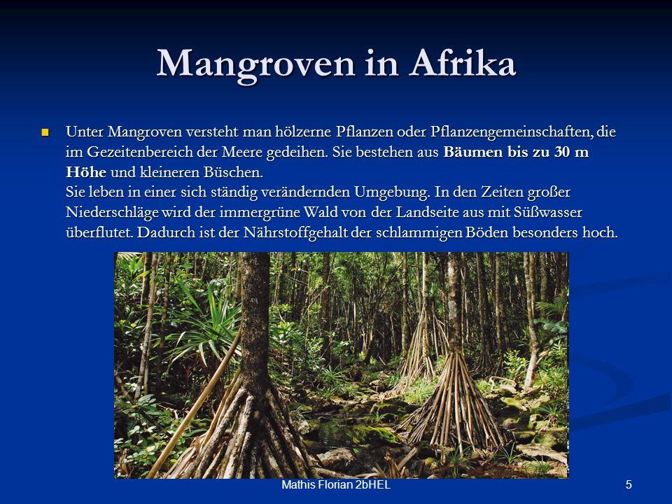 Mangroven in Afrika