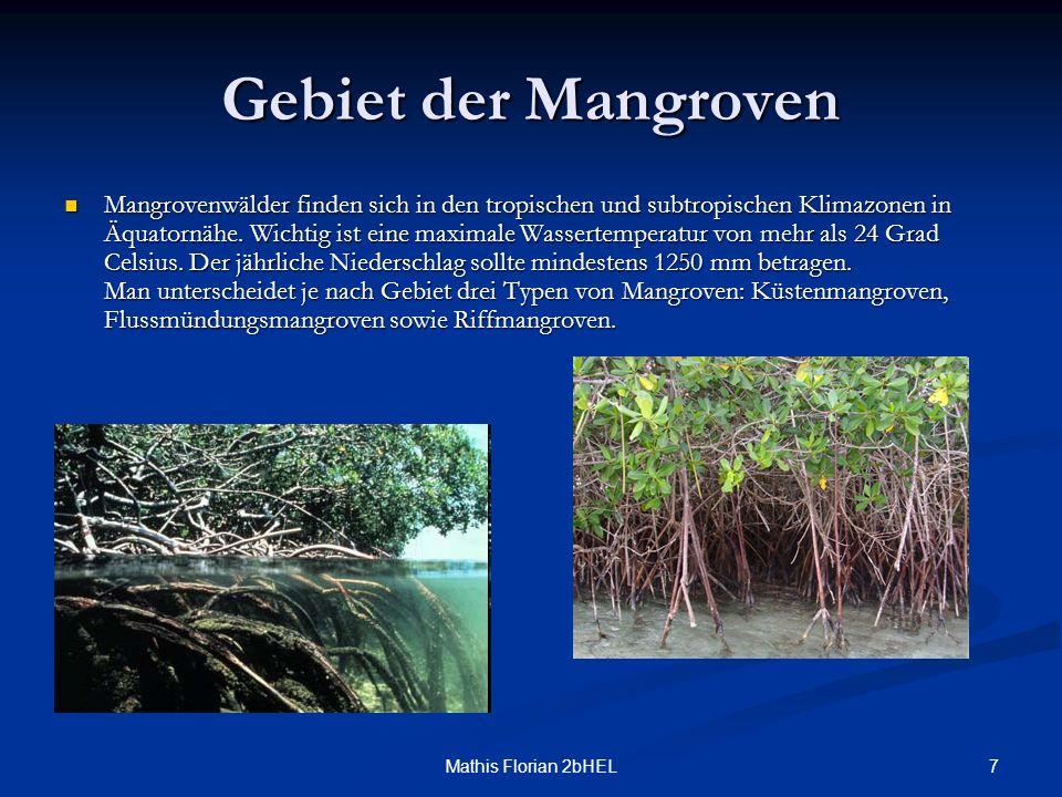 Gebiet der Mangroven
