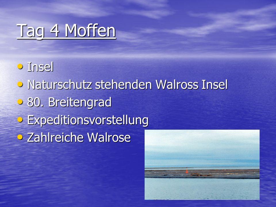 Tag 4 Moffen Insel Naturschutz stehenden Walross Insel 80. Breitengrad
