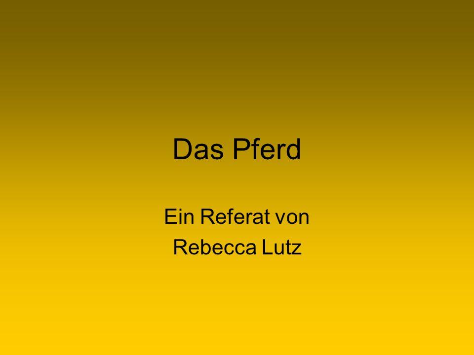 Ein Referat von Rebecca Lutz