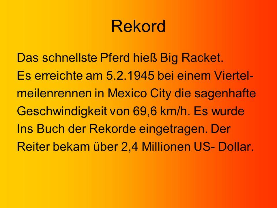 Rekord Das schnellste Pferd hieß Big Racket.