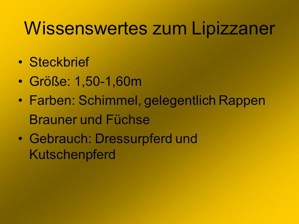 Wissenswertes zum Lipizzaner